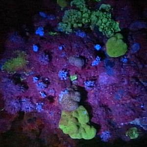 Fluorescence des algues