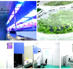 Chambre de culture des plantes