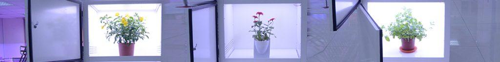 chambre de croissance des plantes