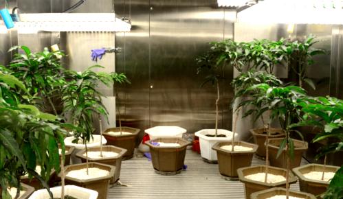 Étagères de plantes hautes