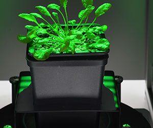 Fluorescence des plantes